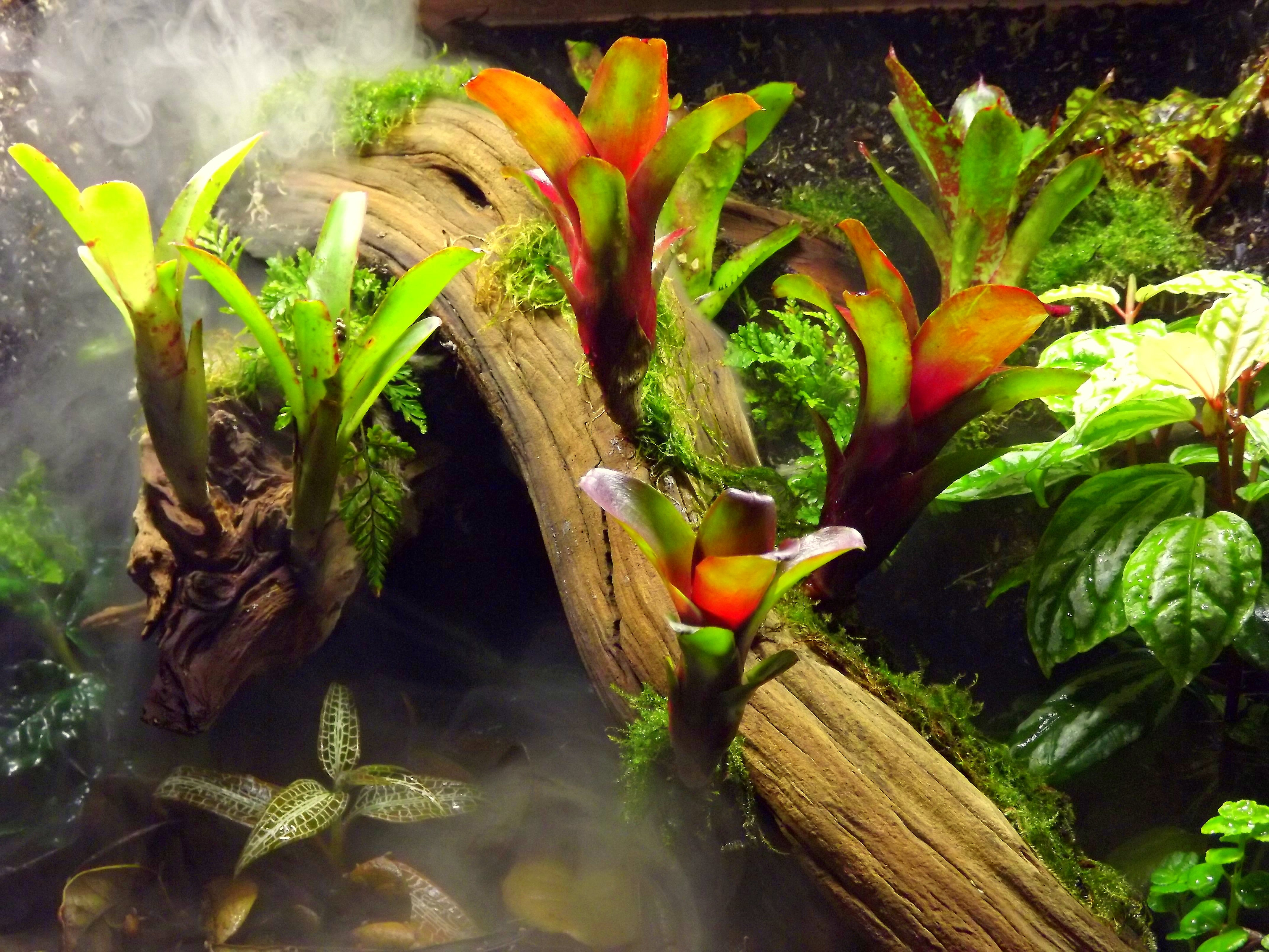Creating A Terrarium Fogger Josh S Frogs How To Guides
