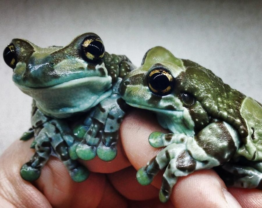 So You Want A Pet Frog For Christmas