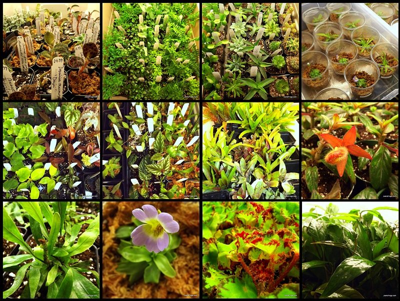 Terrarium Plants 101 Picking The Right Plants