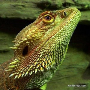 Lighting Your Reptiles And Amphibians Josh S Frogs How To Guides
