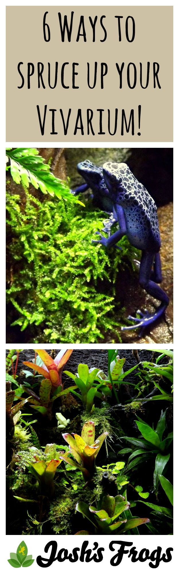 6 Ways To Spruce Up Your Vivarium Josh S Frogs How To Guides