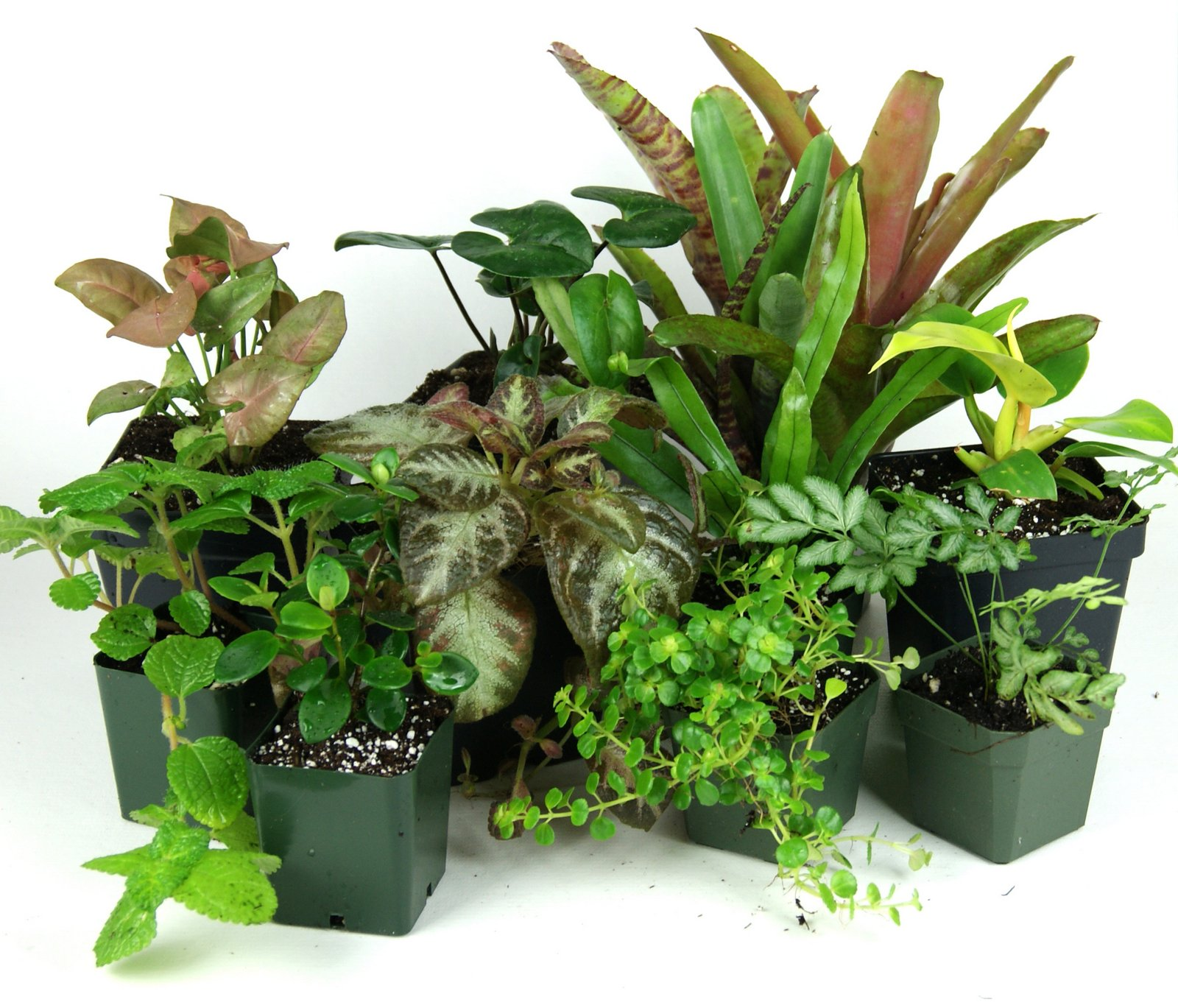 Picking The Perfect Plants Artificial Vs Real Plants Josh S Frogs