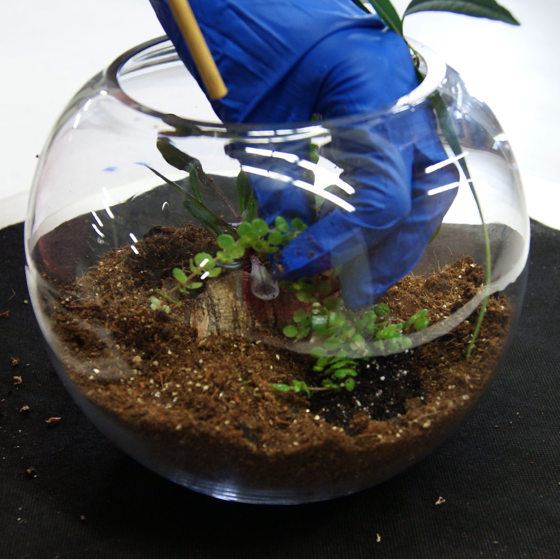 Video How To Care For Your Terrarium Container Garden Or Fairy Garden Josh S Frogs How To Guides