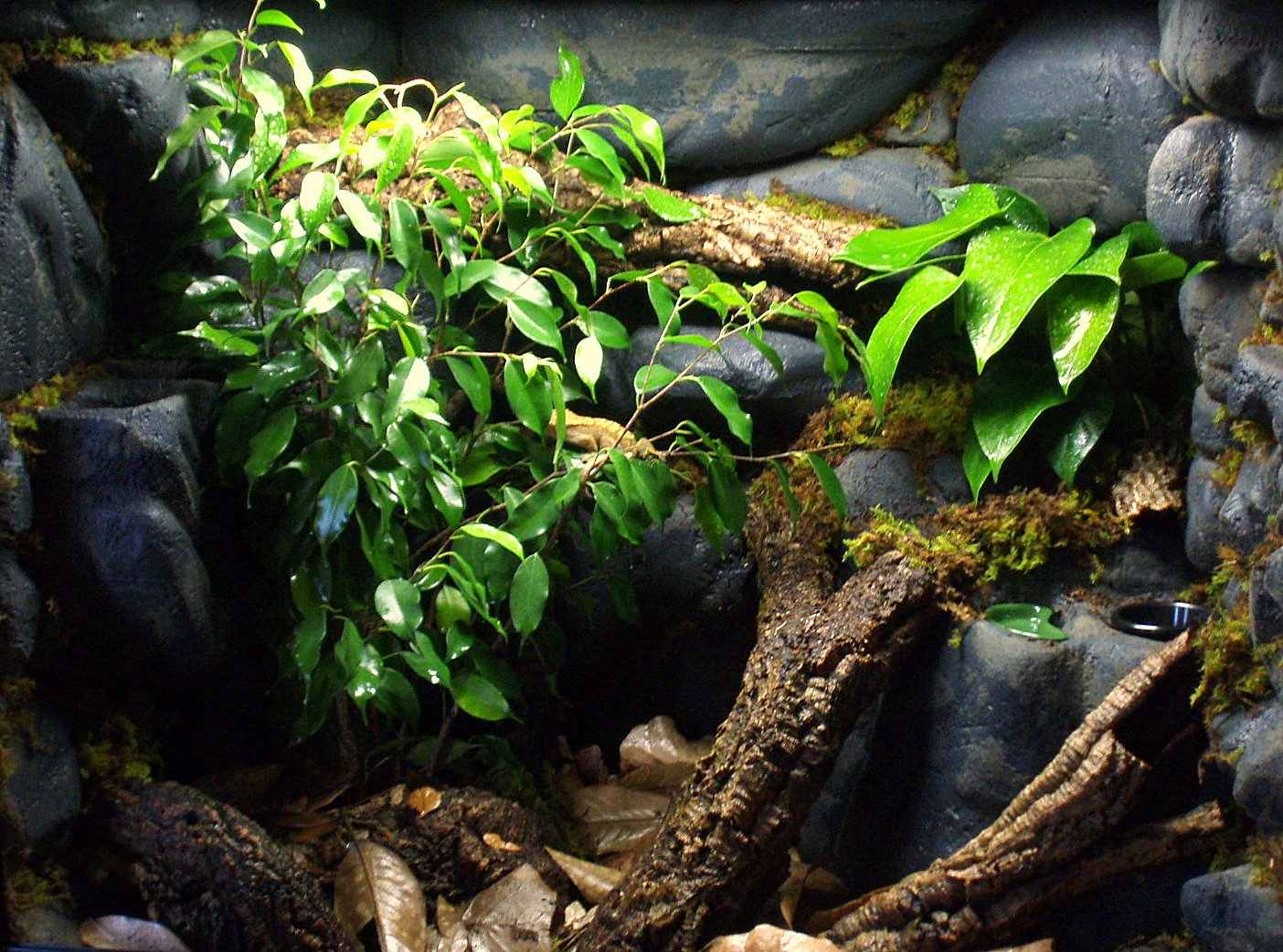 Crafting A Crested Gecko Paradise Josh S Frogs How To Guides