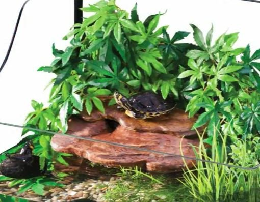 VIDEO: Joshs Frogs Aquatic Turtle Kits - Helping you connect with ...
