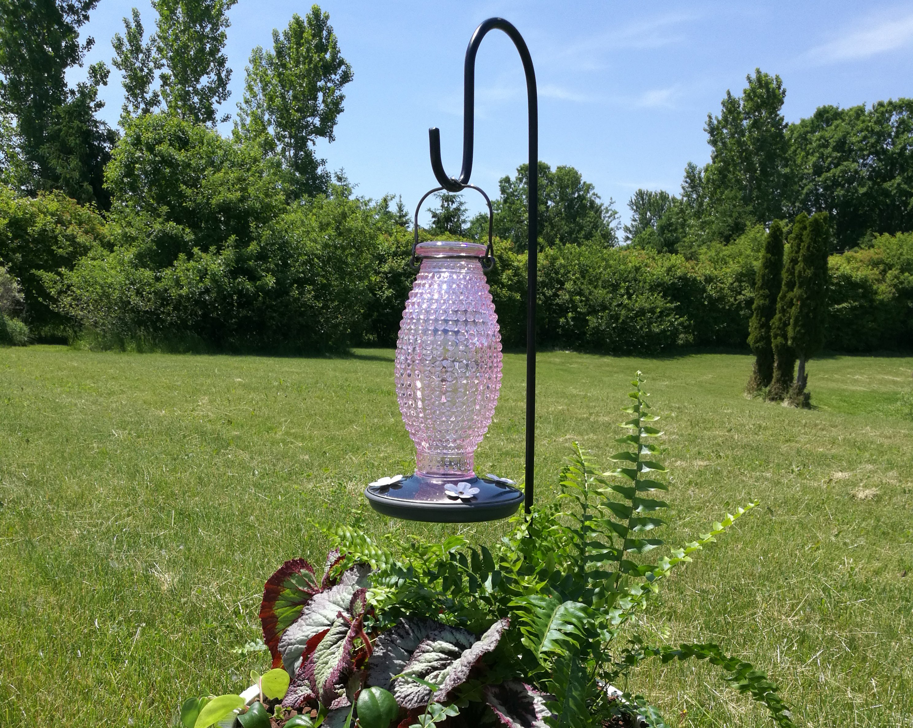 picture about Printable Hummingbird Nectar Recipe referred to as Do it yourself Hummingbird Nectar - Joshs Frogs How-Towards Publications