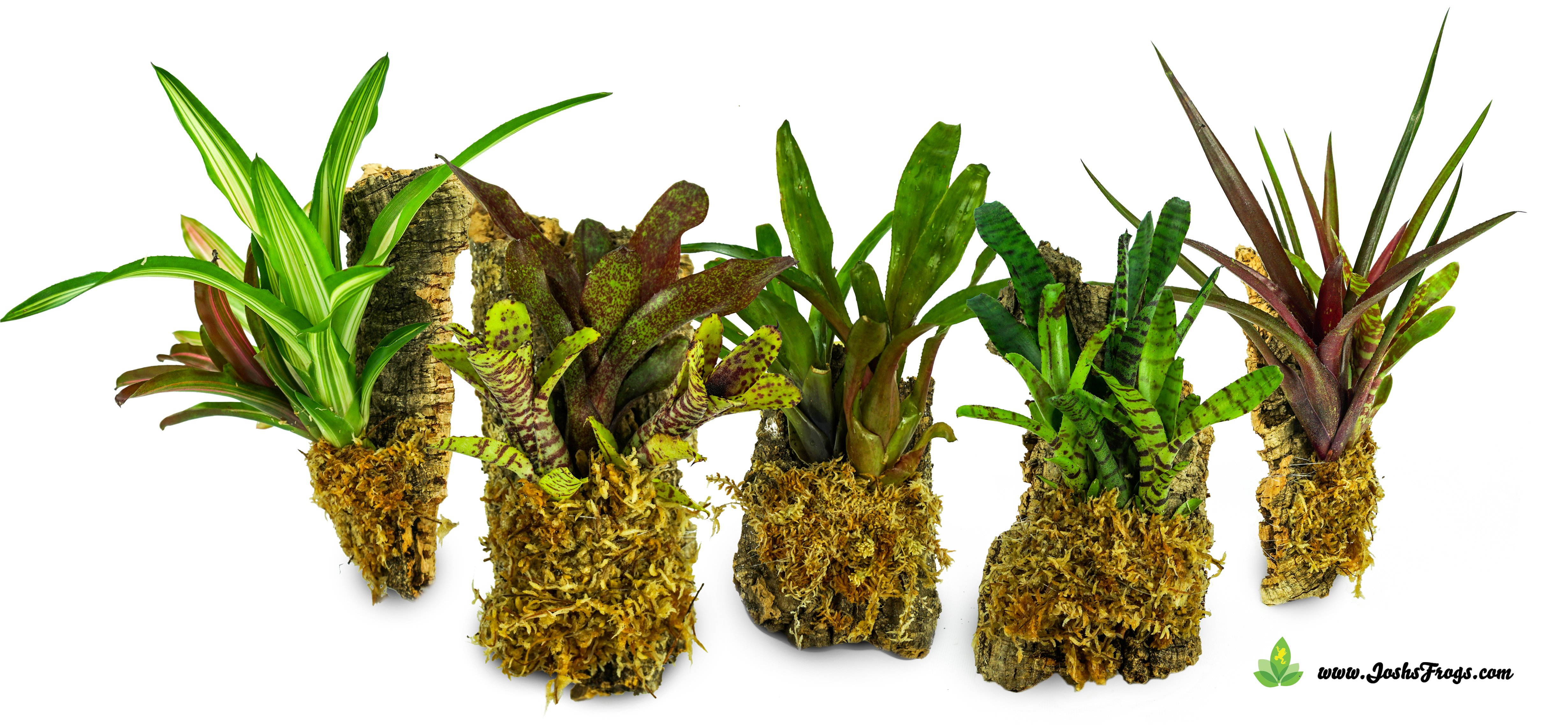 Bromeliads Houseplants Terrarium Plants Gardening And Decor