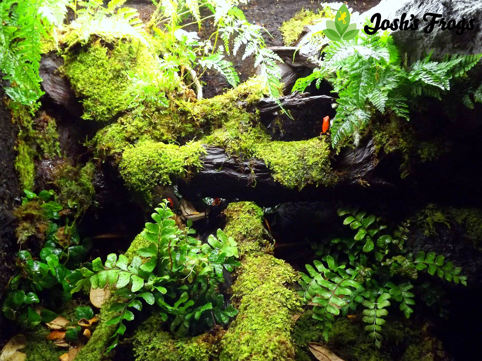 Growing Moss Like A Boss Josh S Frogs