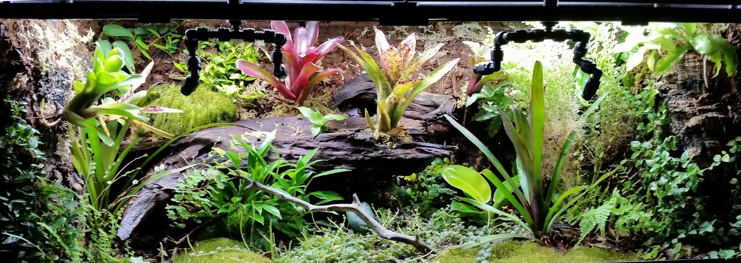Taylor S First Custom Dart Frog Vivarium A Step By Step Guide