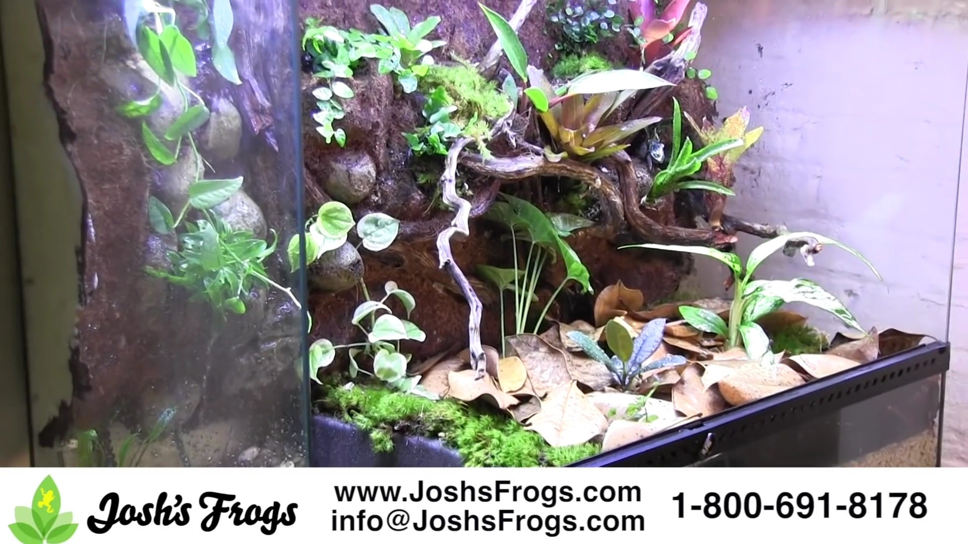 How To Make A Vivarium Waterfall Josh S Frogs How To Guides