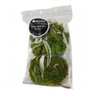 Decorative Fairy Garden Moss (1 Quart)