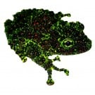 Vietnamese Mossy Frog - Theloderma corticale