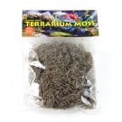 T-Rex Spanish Grey Moss