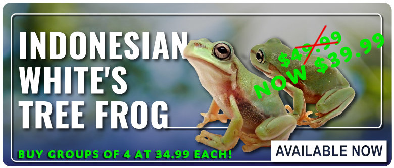 Josh's Frogs - Largest online herps feeders and reptile
